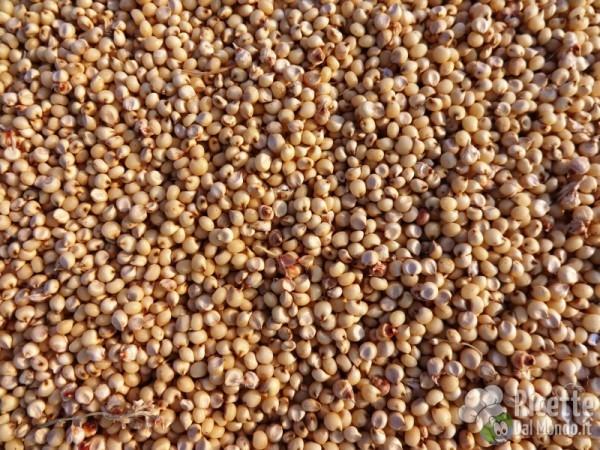 I cereali senza glutine: sorgo