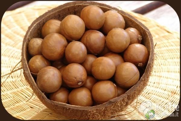 Noci macadamia: dove si comprano